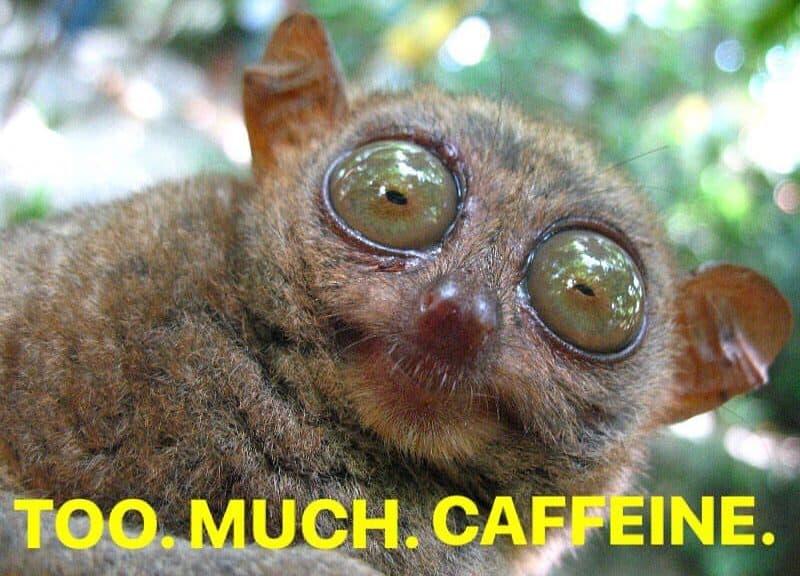 Bug-eyed Kinkajou that looks like he's had too much caffeine.