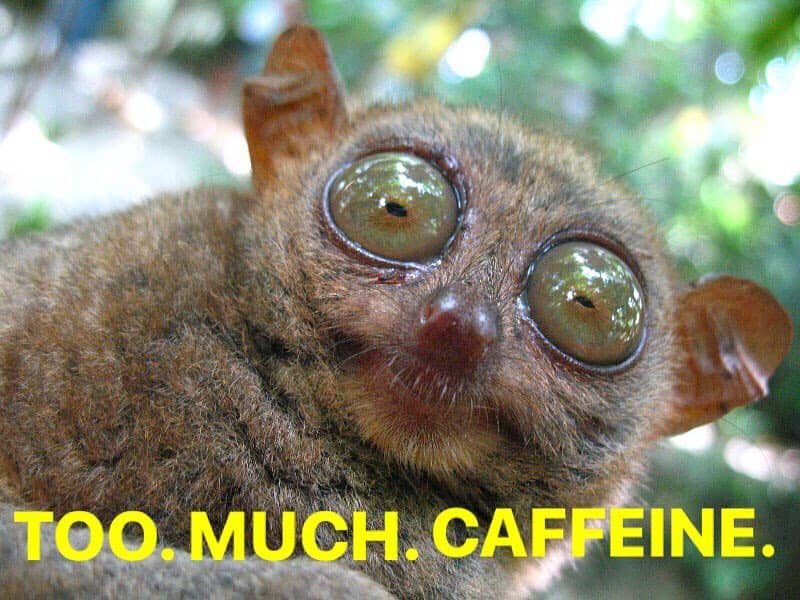 kinkajou with TOO.MUCH.CAFFEINE. caption.